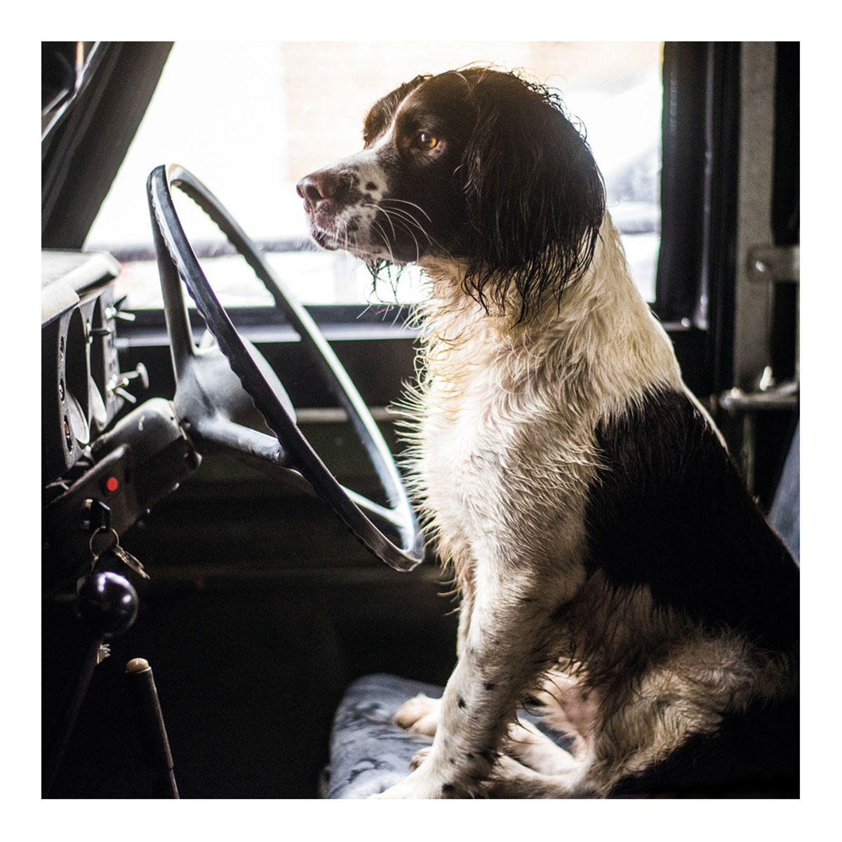 BBC Country File - Spaniel in a Land Rover Greetings Card