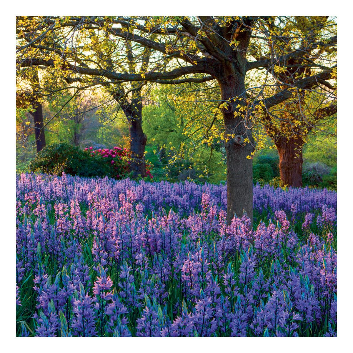 BBC Gardeners' World - Meadow of Camassia Greeting Card