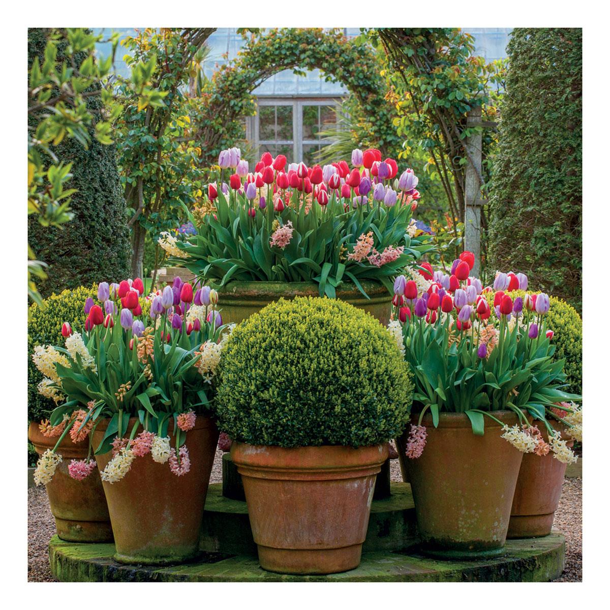 BBC Gardeners' World - Tulip Displays Greeting Card