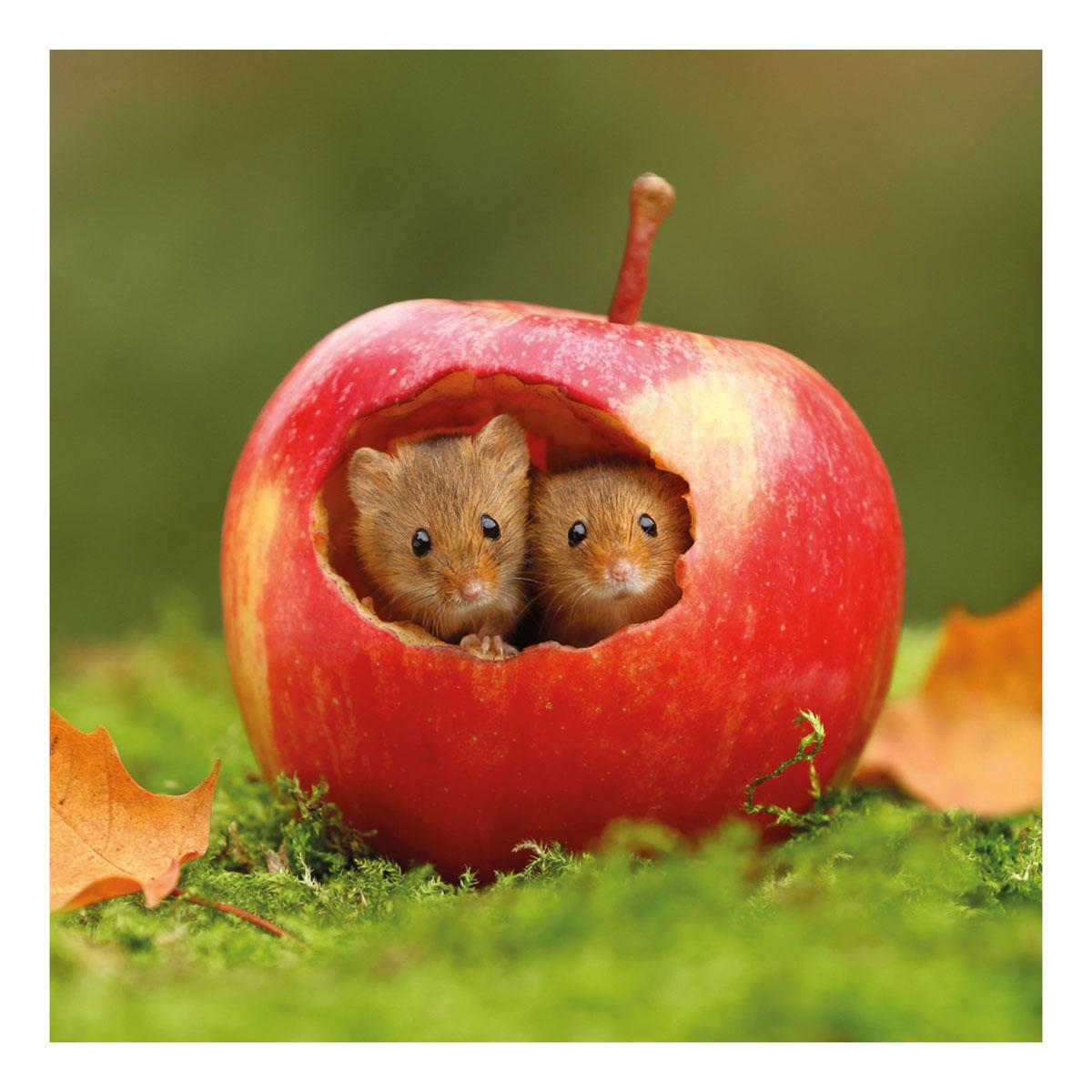 BBC Springwatch – Harvest Mice Greeting Card