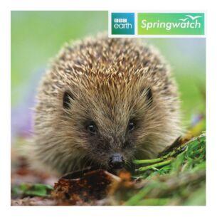 Springwatch – Hedgehog Greeting Card