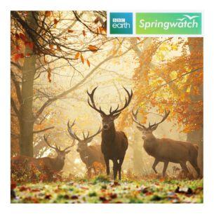 Springwatch – Red Deer Greeting Card