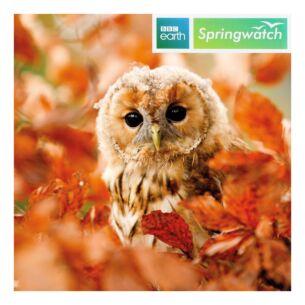 Springwatch – Tawny Owl Greeting Card