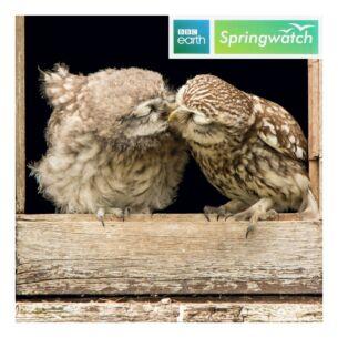 Springwatch – Little Owls Greeting Card