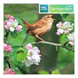 Springwatch – Wren Greeting Card