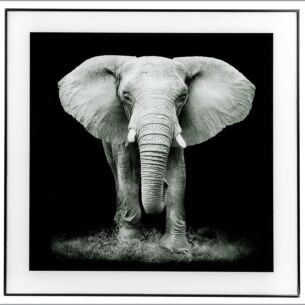 Large Monochrome Elephant Print with Black Frame