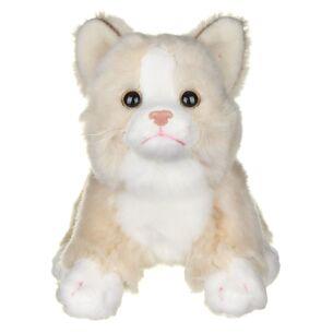 Small Cream Cat