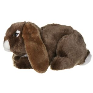 Brown Lop Eared Rabbit
