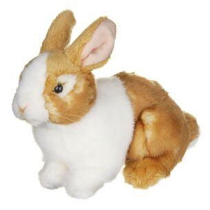 Ginger & White Pet Rabbit