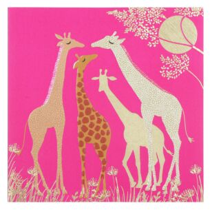 Giraffes Greetings Card