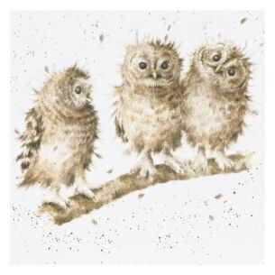 'You First' Owl Card