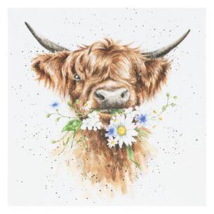 'Daisy Coo' Cow Card