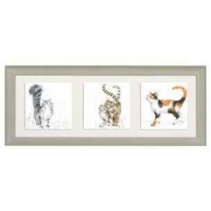 'A Trio Of Cats' Triple Print with Sage Frame