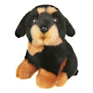 Small Rottweiler Dog