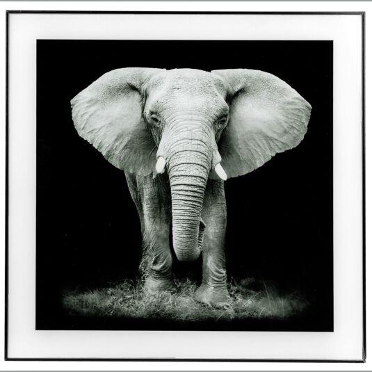 Large Monochrome Elephant Print with Black Frame