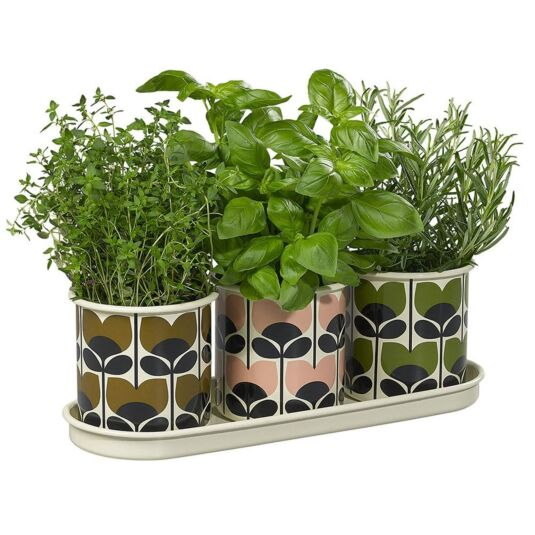 Set of 3 'Climbing Rose' Herb Pots & Tray