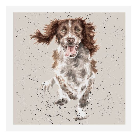 A Dog's Life Springer Spaniel Card