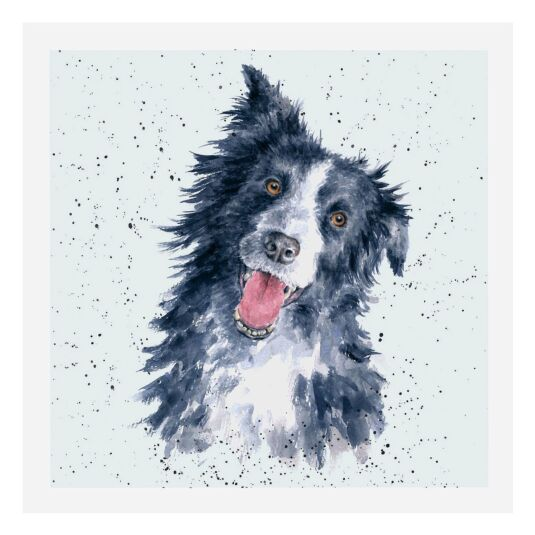 A Dog's Life Border Collie Card