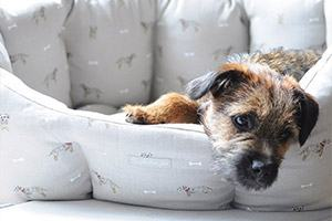 Terrier range from Sophie Allport
